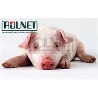 Pig zyme-10 kg dodatek enzymatyczny, który wspomaga trawienie
