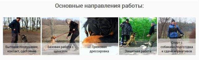 Дрессировка собак в Запорожье - команда SmartDog Запорожье - изображение 6
