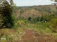 Own 2 Acres Of Fertile Land In Kandara In Murang'a County Very Cheap 0