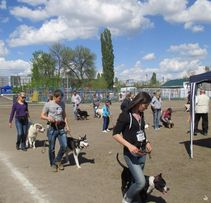 Дрессировка собак в Николаеве
