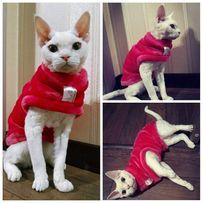 Свитер для сфинкса, одежда для котов, кошек, собак, животных, новая!