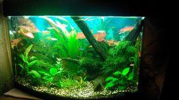 Обслуживание и уход за аквариумом.