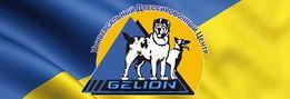 Дрессировка собак в Киеве и области, пансион