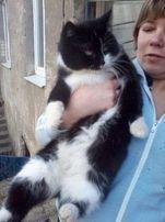 отдам черно - белую кошку,стерилизована,1,5 года