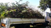 Image of Removal of Rubble, Garden refuse, Waste & other Commodities