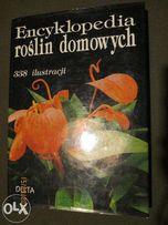 Encyklopedia Roślin Domowych Anna Skalicka