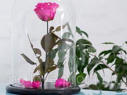 Роза в колбе Малиновый радолит Доставка по всей Украине