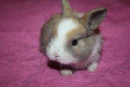 Малявочки мини кролики ждут вас