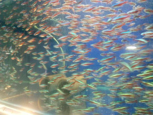 оптово розничный центр продажи аквариумных рыбок с Харькова Киев - изображение 3
