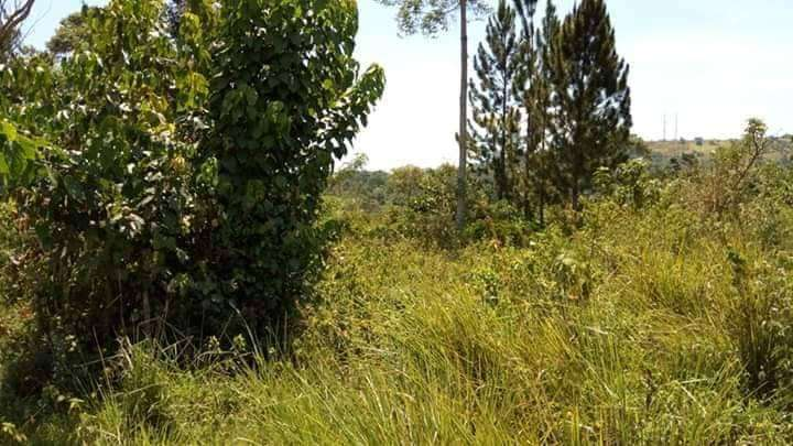 20 Acres of land for sale in mbarara 0