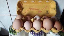 Wiejskie Świeże jaja , mleko ,twaróg i śmietana