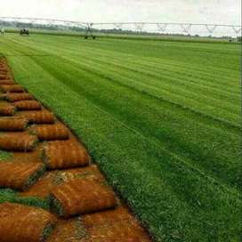 Instant lawns for sale