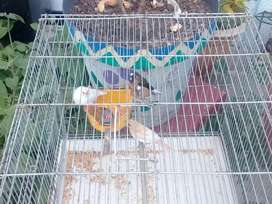 5 × Finches  + cage