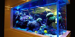 Обслуживание и уборка аквариумов.