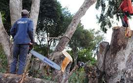 We do tree-felling/garden services/rubble removal. Call us for a quote