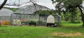 Greenhouse Tunnel Frame