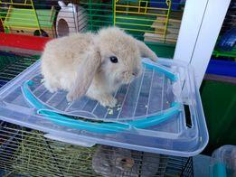 Крольчата вислоухие