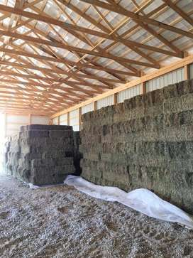 Alfalfa,Teff Hay & Poultry Feeds