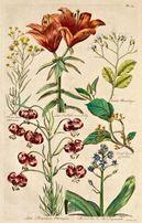 KWIATY 1757 r. reprint XVIII w. grafik do wystroju wnętrza