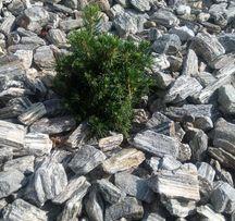 Kora kamienna grys kamień pasiasty szary gnejs darmo DOSTAWA+głaz