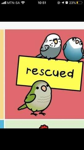 Rescue for unwanted birds and animals