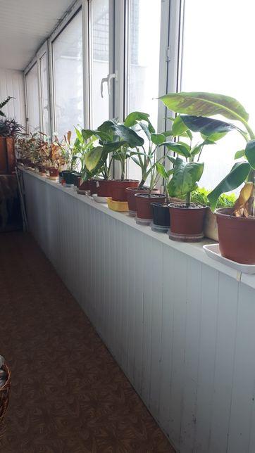 Цветы балконные растения