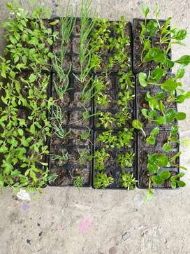 Spring Special! Plant Seedlings for sale! Great Prices!