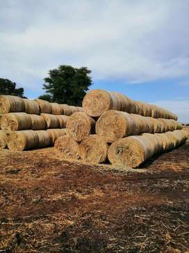 Hawer oats bales