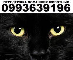 Передержка домашних животных Киев. Гостиница для кошек, попугаев и тп