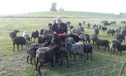Sprzedam owce rasy wrzosówka