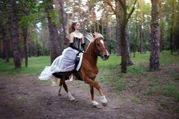 Конные прогулки, верховая езда, лошади, пони