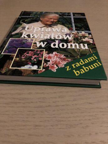 Uprawa kwiatów w domu Czchów - image 3
