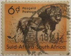 South Africa, Wild Life, African Lion, 6 d, 1954 used