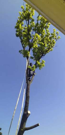 Tree felling and rubble removal