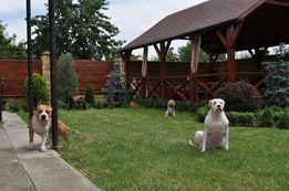 Зоогостиница для собак и кошек