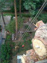 Удаление деревьев по частям, безопасно. Резка деревьев на кладбище