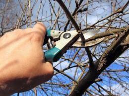 Обрезка деревьев, обрезка сада, побелка, обработка, опрыскивание сада.