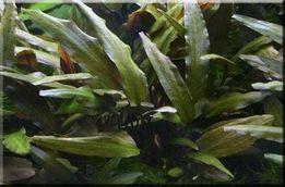 kilkanaście gatunków roślin