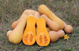 Семена тыквы Арабатская мускатных сортов / большой пакет- 10 грамм
