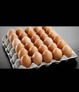 R399,99 a box of Eggs! 30 doz/ 12 trays/ gr1. Clean and fresh :)
