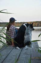 Пансион, гостиница для собак домашнего типа