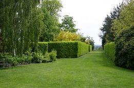 Газонная трава / садово-парковый газон