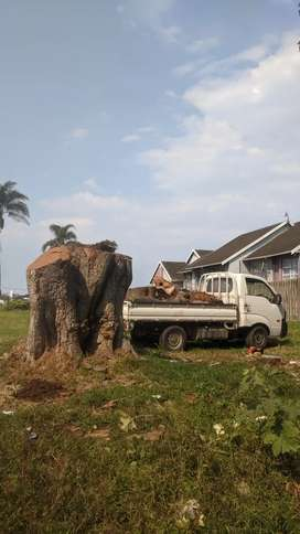 Rasta's tree felling and Furniture removals