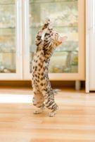 нежные котята для семьи