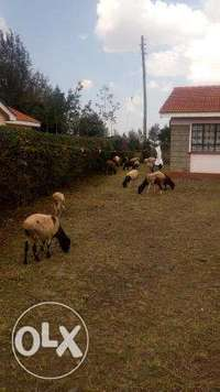 HS09 – Ngong Town 3bedroom Bungalow for only 9m 0