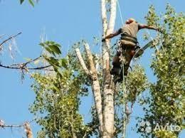 Спил деревьев любой сложности.распиловка дров
