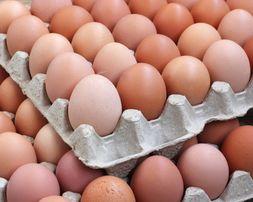 Sprzedaż paletowa Jaj (hurt)