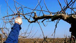 Обрезка на плодовых деревьев