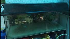 Fish Tank (Aquarium) for Wet Pets