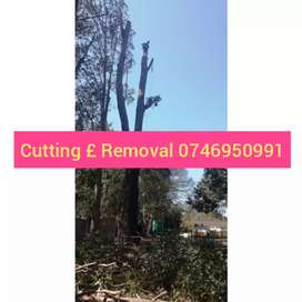 Tree Felling and Stump poisoning